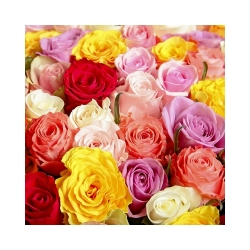 Florist Choice Bouquet inc Roses from $40
