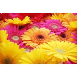 Florist Choice Bouquet inc Gerbras from $40